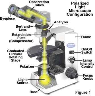 https://micro.magnet.fsu.edu/primer/techniques/polarized/images/polmicroalignmentfigure1.jpg